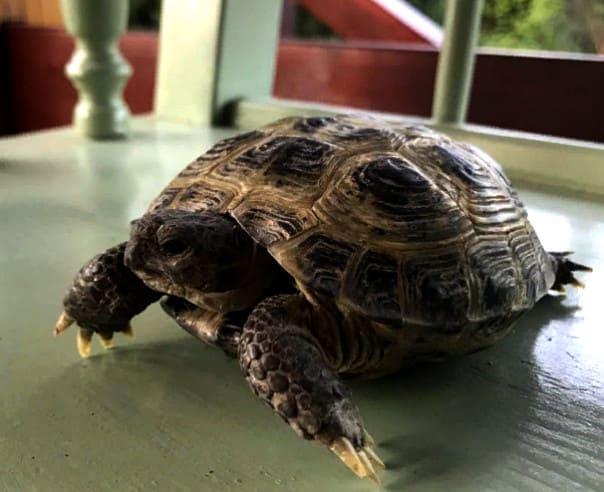 черепаха потерялась в квартире, где искать