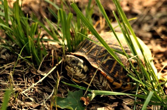 если черепаха потерялась, где искать
