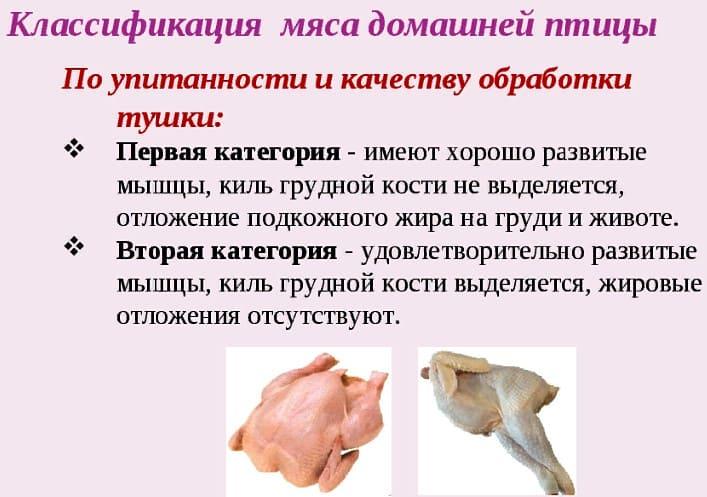 мясо птицы определение качества